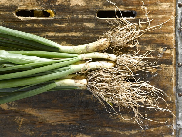 Spring Onions, Photo: Steven Krause